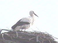 storch2004_2