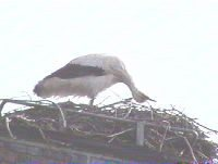 storch2004_3