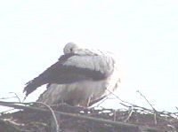 storch2004_4