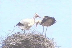 storch07_10_04_04