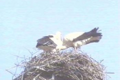 storch09_10_04_04