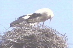 storch10_10_04_04