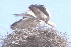 storch13_10_04_04