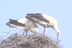 storch14_10_04_04