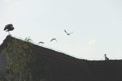 128_storch_10-07-06