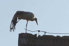 130_storch_10-07-06