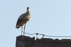 131_storch_10-07-06