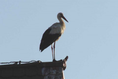 132_storch_10-07-06