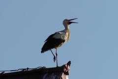 133_storch_10-07-06