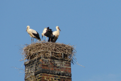 134_storch_10-07-06
