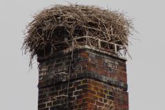 01-lehres-nest