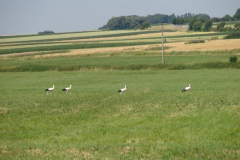 familie-storch-01