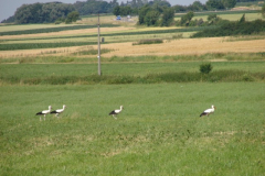 familie-storch-03