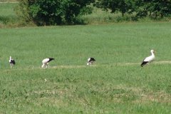 familie-storch-04