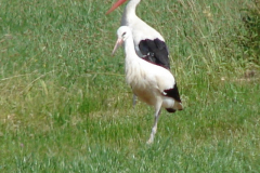familie-storch-08