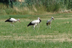 familie-storch-09
