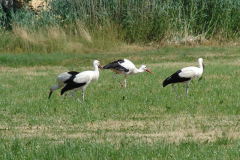 familie-storch-10