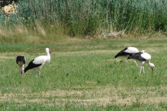 familie-storch-11