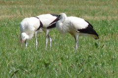 familie-storch-12
