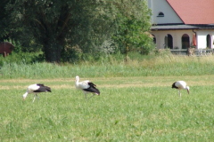 familie-storch-13