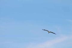 storchennachwuchs-fliegt_10-07-2016_001_030
