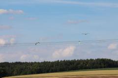 storchennachwuchs-fliegt_10-07-2016_001_031