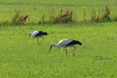 158_storch_09-08-06