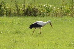 160_storch_09-08-06