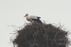 familie_storch_2005_05-1