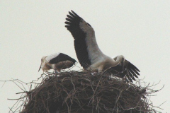 familie_storch_2005_07-1