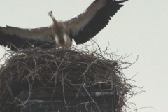 familie_storch_2005_08