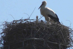 Storch_14-05_001