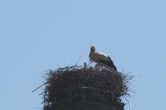 Storch_14-05_003
