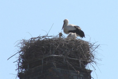 Storch_14-05_004