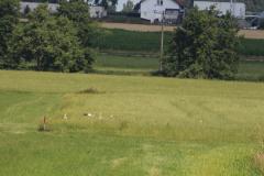 storchennest-wittelshofen-15-07-2019_003