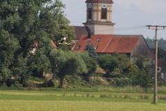 storchennest-wittelshofen-15-07-2019_016