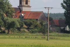 storchennest-wittelshofen-15-07-2019_017