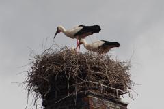 storchenfamilie_16-04-14_002