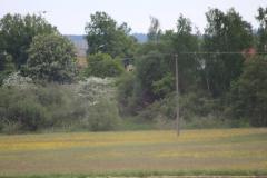 storchenfamilie-17-05-15_005