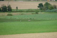 storchenfamilie-17-07-11_001