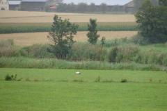 storchenfamilie-17-07-11_004