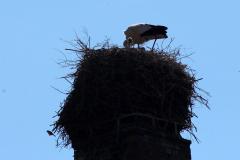 storchenfamilie-18-05-2019_002