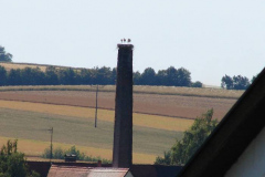 136_storch_18-07-06