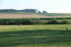 139_storch_18-07-06