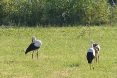 141_storch_18-07-06