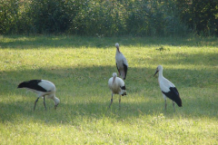 146_storch_18-07-06