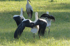 147_storch_18-07-06