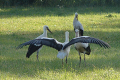 149_storch_18-07-06