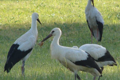 150_storch_18-07-06