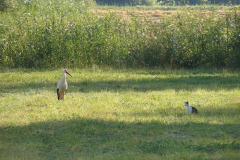 152_storch_18-07-06